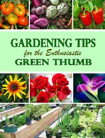 Gardening Tips for the Enthusiastic Green Thumb